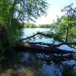 Looking toward proposed pipeline crossing - Nashua River